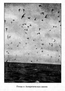 Птицы в Антарктическом океане.